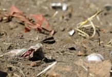 Hallan microplásticos en aves rapaces de Florida