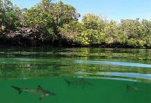 UNESCO aumenta tamaño de la reserva de Galápagos