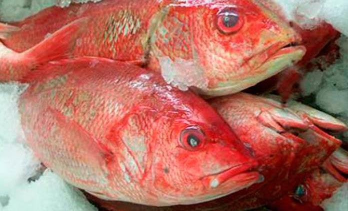 Tipos de pescado y sus beneficios