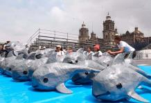 """Salvar a la vaquita marina es prioridad"""