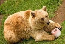 Con paletas de hielo, zoológicos de CDMX buscan refrescar a animales