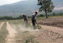 Presume Sader superávit en exportaciones del agro