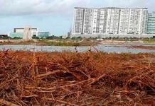 A 4 años de su devastación, Tajamar será restaurado