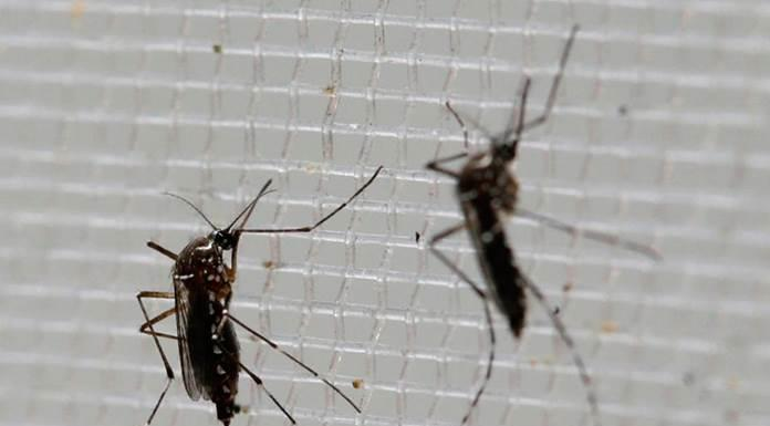 ¿Por qué pican los mosquitos? ¿Qué los atrae?'>