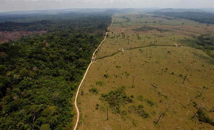 Los árboles de la Amazonía son cápsulas del tiempo, según un nuevo estudio