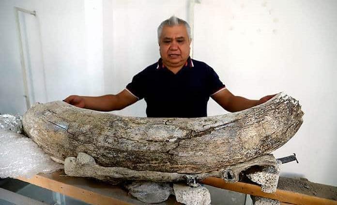 Hallan fósiles animales en Puebla
