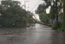 Lluvias derrumban cuatro árboles: PC