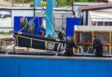 Rusia libera los primeros cetáceos de la cárcel de ballenas