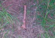 Hallan huesos humanos en unas parcelas