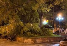 Municipio sin recursos para sustituir árboles derribados por tromba