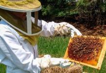 Reconoce Sader grave crisis en la apicultura