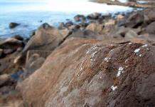 """Científicos hallan """"costras de plástico"""" en rocas del mar"""