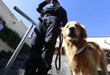 Policía Federal dará en adopción 28 oficiales caninos