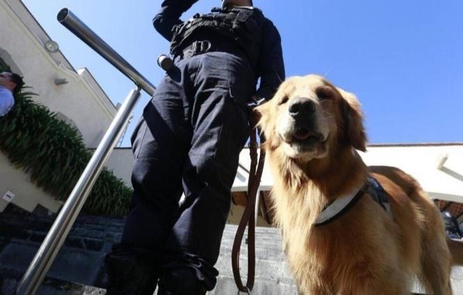 Se jubilan 28 perros policía, son adoptados por familias