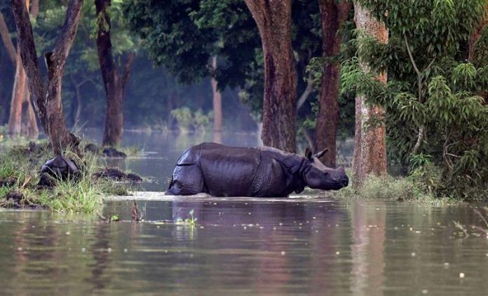 Al menos 12 muertos por inundaciones en noreste de India