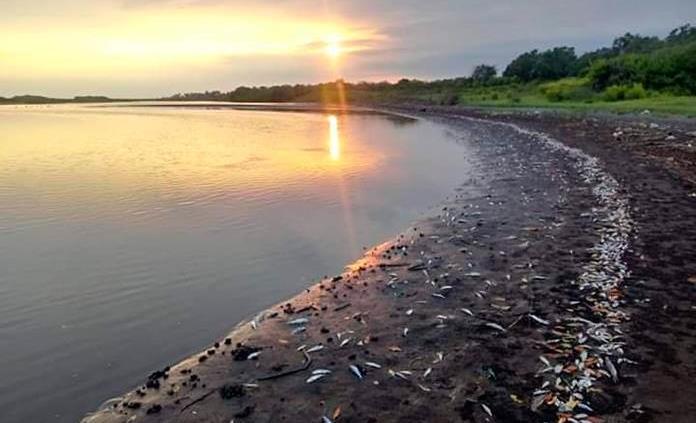 Aparecen centenares de peces muertos en playa del Pacífico guatemalteco