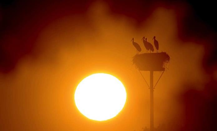 Aumento de dos grados en temperatura terrestre provocaría estragos irreparables