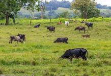 El impacto climático del uso de suelo y la dieta mundial, en cuatro claves