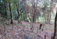 Pide Coparmex frenar la tala clandestina en la Huasteca