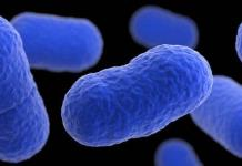 España activa alerta sanitaria mundial por brote de listeriosis