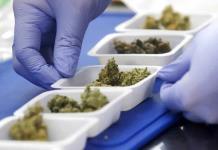 Advierte estudio que fumar marihuana constituye un riesgo adicional en tiempos del COVID-19