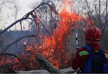 Especies como el jaguar, a la sombra de muerte por los incendios en Bolivia