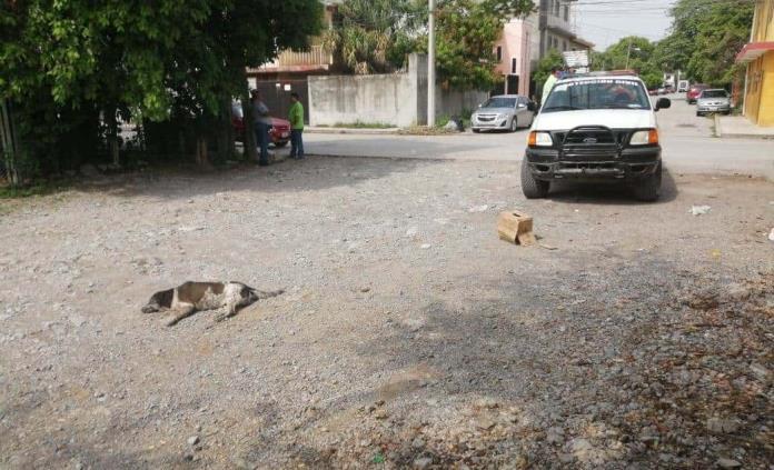 Denuncian envenenamiento de perros en Ciudad Valles