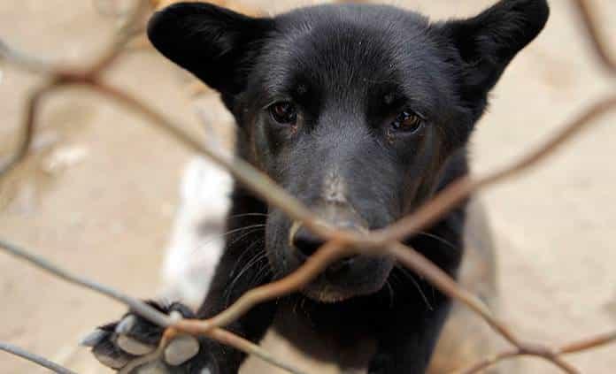 Denuncian matanza de perros en Col. Vergel