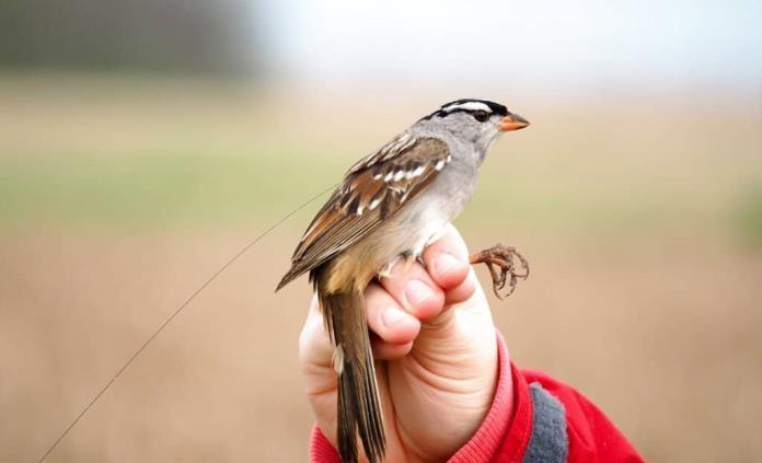 Afecta cambio climático migración de aves
