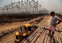 El Fondo Amazonia seguirá detenido