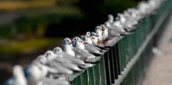 EEUU y Canadá han perdido un 29% de sus pájaros en los últimos 50 años