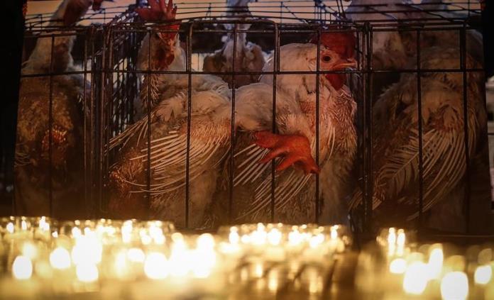 El 63% del mercado español ya no venderá huevos de gallinas enjauladas