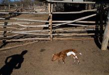 Chile afectado por la peor sequía en más de medio siglo