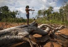 La deforestación en la Amazonía brasileña aumenta un 93 % en lo que va de año