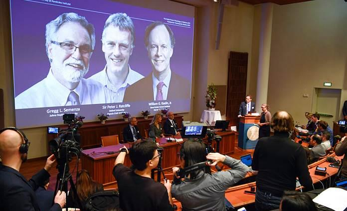 El Nobel de medicina premia la investigación celular