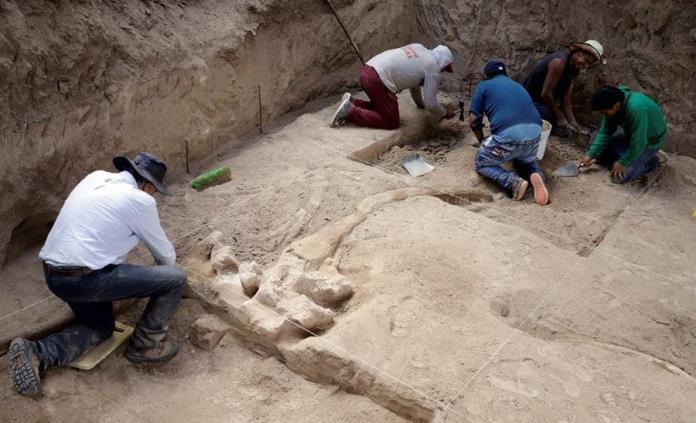 Hallan huesos y colmillos de un mastodonte en el estado mexicano de Puebla