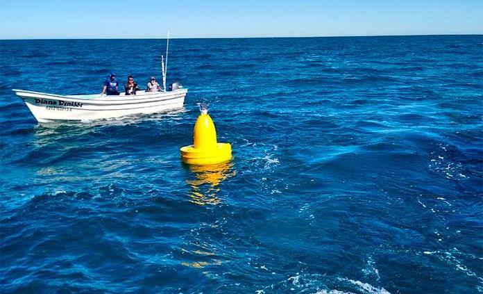 Colocan boyas para señalizar área de recuperación de vaquita marina