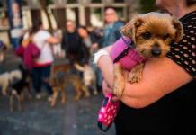 Animales de compañía ayudarían a enfrentar mejor los trastornos mentales