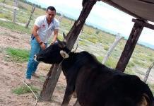 Protegerán hatos contra la rabia en Rioverde