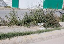 Avenida Ponciano Arriaga, con camellón lleno de basura