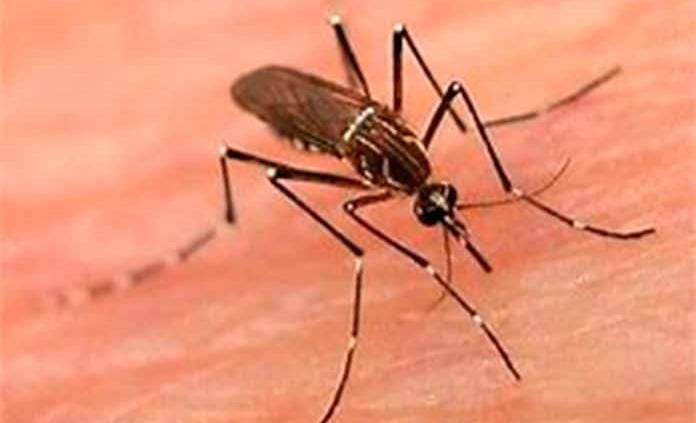 SLP suma 19 casos de dengue durante 2020