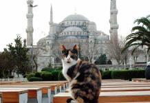 Gatos callejeros: las mascotas colectivas en Estambul