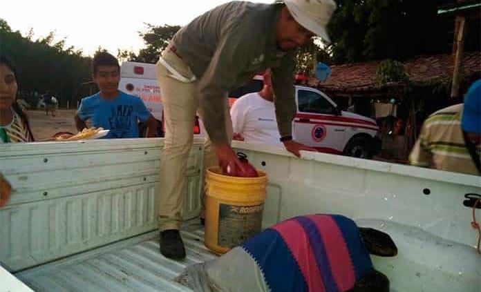 Atienden a tortugas afectadas por marea roja en Oaxaca