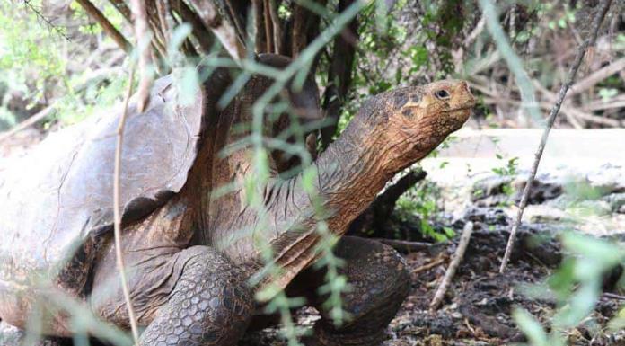 Expedición en volcán en Galápagos busca descendientes de especies extintas'>