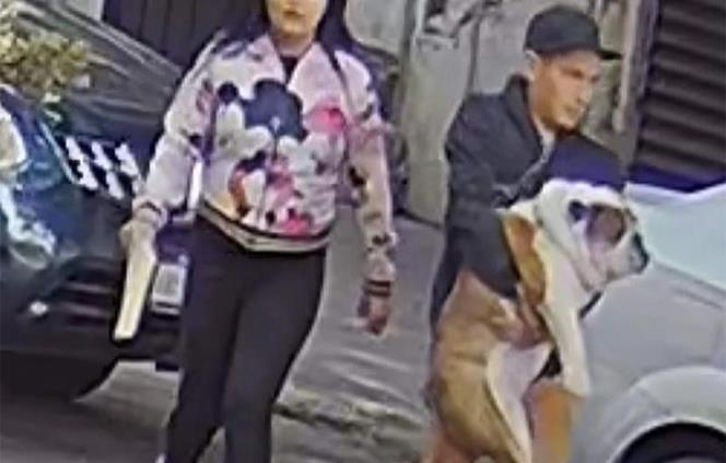 Captan a pareja que robó perrito en la colonia Roma
