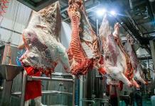 Senasica pide extremar precauciones contra el clembuterol en ganado bovino