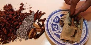 Tamales de insecto, la propuesta para revalorar el campo mexicano