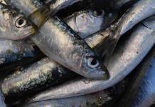 Por qué es bueno comer sardinas