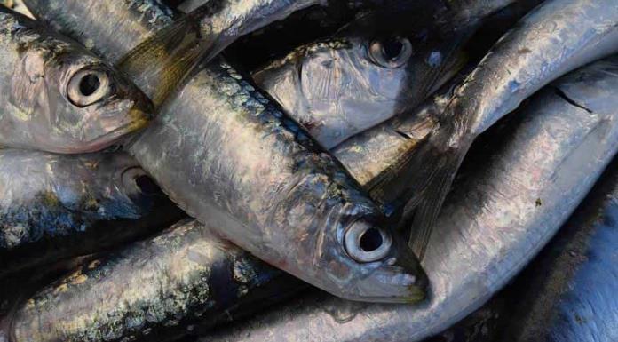 Por qué es bueno comer sardinas'>