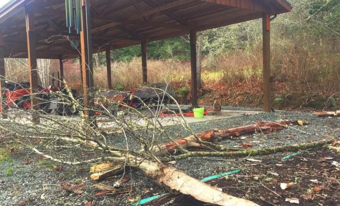 ¿Cómo tener un jardín a prueba de desastres causados por cambio climático?